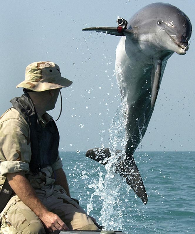 military dolphin
