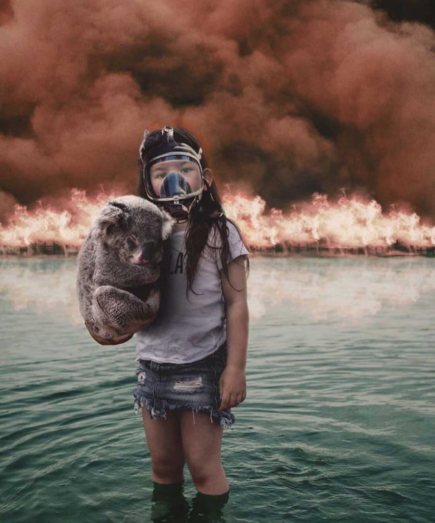 australia bushfire animals saved