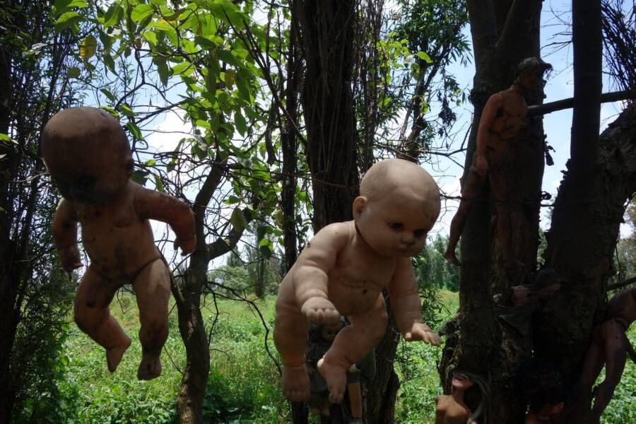 undressed dolls hanging from the tree.