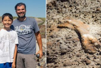 12 year old boy discovers 69 million year old dinosaur fossils