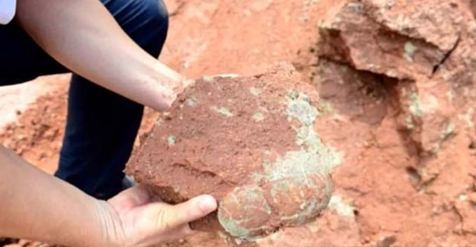 9-year-old boy accidentally finds 66 million-year-old dinosaur eggs