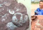 9 year old boy finds 66 million year old dinosaur eggs