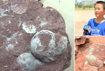 9 year old boy finds 66 million year old dinosaur eggs