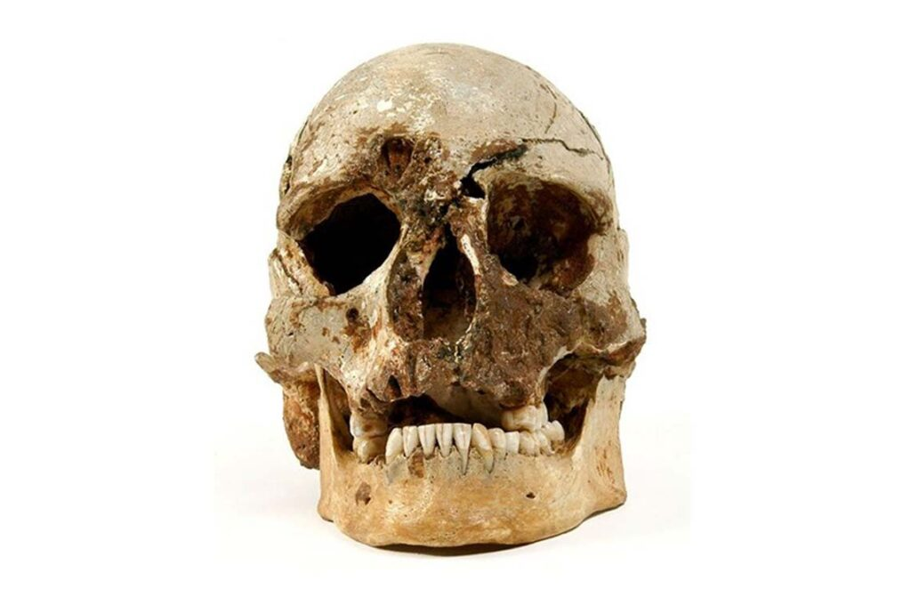 Cheddar man's skull, the oldest complete human skeleton discovered in Britain.