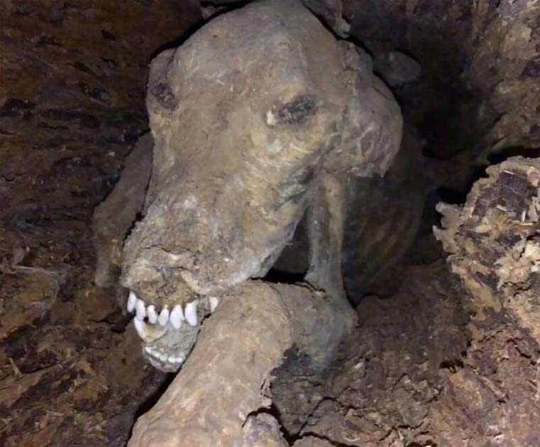 Stuckie - The Mummified dog, got his name in 2002 naming contest