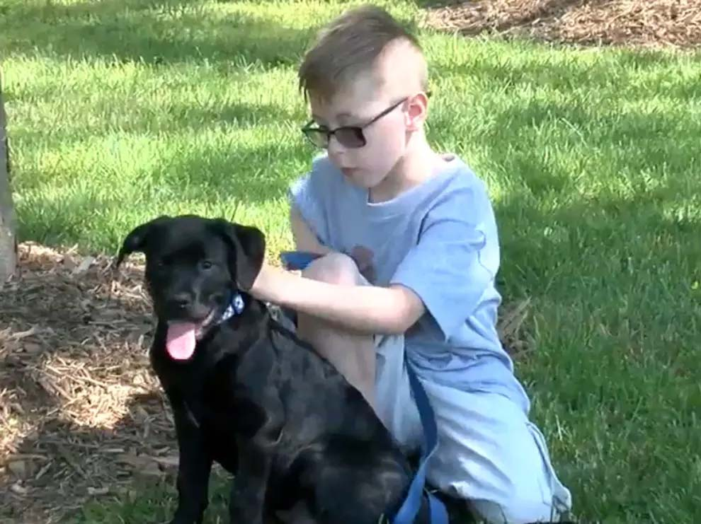 An 8-Year-Old Boy Sold His Pokémon Cards to Pay for His Sick Dog's $700 Treatment