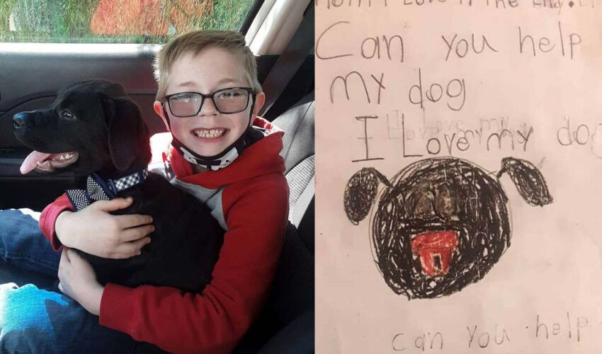 boy sold pokemon cards to pay his dogs vet's bill
